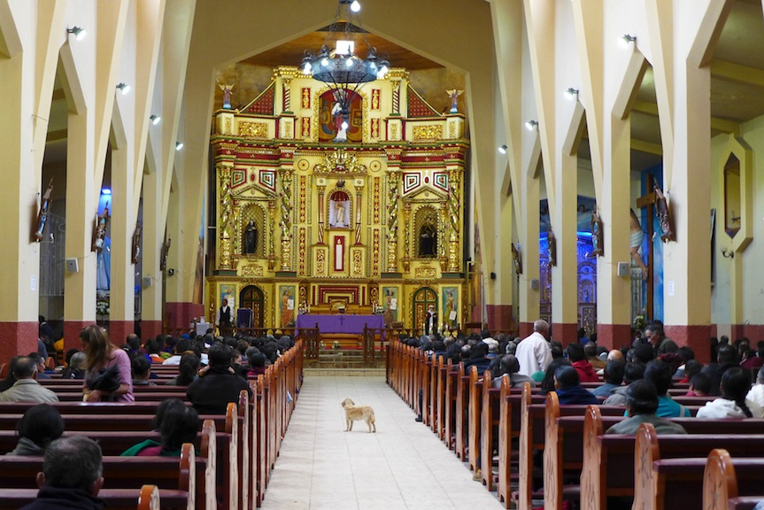 inside church w dog