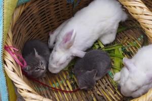 rabbits & kittens
