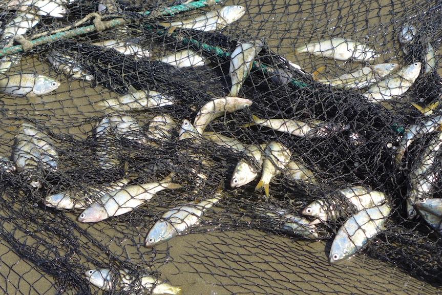 fish in netJPG
